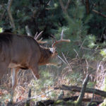 Dr. Robert Sheppard, Jerry Simmons and Horace Gore on How Moon Phases Impact Deer Feeding