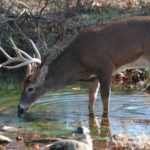 Scientists Tell about Deer Hunting by the Moon