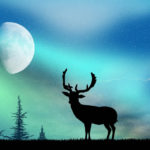 The Deer Rut and the Influence of Moon Phase