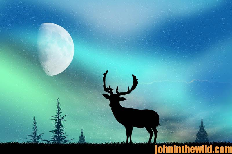 deer and the Northern Lights