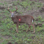 Secret #1 for Late Season Bow Buck Deer – Look for Food