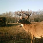 Learn How to Find Big Bucks with Cody Robbins