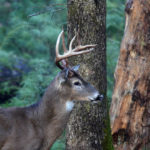 Determining What Deer You'll Have to Hunt Next Year