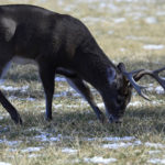 Evaluating the Deer Herd and Planning for the Upcoming Season