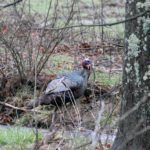 Ole Fred – Another Tough Turkey with Phillip Vanderpool