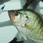 Watch Your Speed and Fish with Different Colors of Jigs for Crappie with Roger Gant