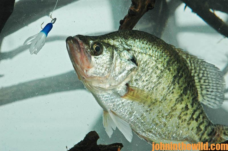 how to catch crappie with a jig