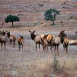 Learn Two More Secrets for Taking Public Land Elk