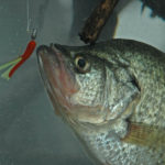 Solving More Flood Water Crappie Problems with Jonathan Phillips