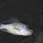 Fish with Light Tackle and Learn to Use Your Depth Finder for Summer Crappie