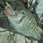 Identify the Thermocline, Bottom Breaks and Cover to Catch Hot Weather Crappie