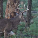 Should You Use the 6mm for Deer Hunting?