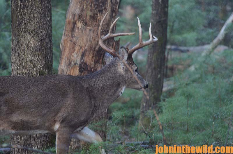 should you use the 6mm for deer hunting john in the wildjohn in