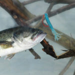 How Fishing for Bass in Terrible Weather Can Mean Great Bass Fishing