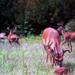 Pinpoint the Best Lands to Hunt Deer – Particularly Small Acreages