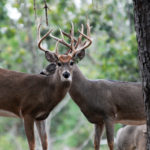 Solve Warm Weather Hunting Problems to Take More Deer