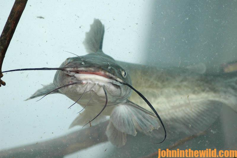 How to double your pleasure and your fun jug fishing for for Jug fishing for catfish