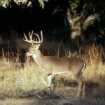 Find Meandering, Terrain and Mating Trails That Deer Use