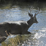 Locate Water and Food Trails for Rutting Deer