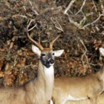 Identify Invisible Trails and Trash Trails to Take Whitetail Deer