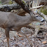 Define Whitetail Deer Highways