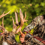 Placing Your Tree Stand to Take Extraordinary Bucks