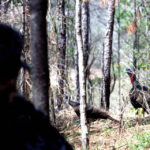 How to Have an Almost-Perfect Shot on Turkeys