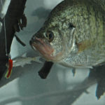 How to Catch Cold Water Crappie in January with Ohio's Bob Jones