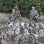 Understanding Coyotes and Taking Them