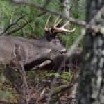 Selecting Missouri as an Every Year Place to Bowhunt Deer