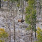 You Can Hunt Public Land Elk Successfully in Utah and New Mexico
