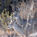 How to Hunt Deer with Feeders Legally