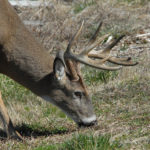 Why Plant Hidey Holes to Possibly Take Green Field Bucks