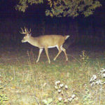 How to Scout for Big Buck Deer in Faraway States Using Observation Stands and Sanctuaries