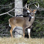 How to Pinpoint Big Buck Deer in Faraway States Where No One Looks for Them