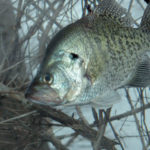 Know When to Fish Rivers or Lakes for Crappie