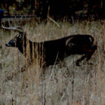 Why to Use Attractants to Hunt Deer's Night Trails