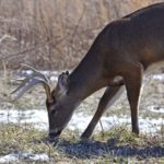 When Snow and Water Cover the Land and How That Affects Deer