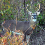 How to Hunt Deer Terrain Trails with Attractants