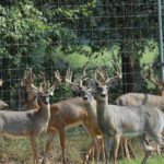 How Alabama and Other States Have Implemented Regulations to Stop Chronic Wasting Disease (CWD)