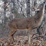 What to Do When You're Hunting Deer and the Wind Changes