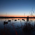 Learning the Best Late Season Decoy Spreads