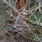 What to Look for in a 60 Acre or Less Lease to Hunt Deer