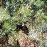 How Important Is Sanctuary to Having Deer on Your Land