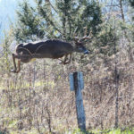 Why 40-60 Acres of Land Can Produce Deer