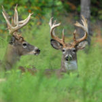 Scout the People and Their Odor to Know Where to Locate Mature Buck Deer