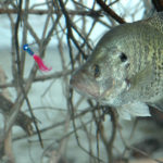 Understand the Mistakes Cold-Weather Crappie Fishermen Make