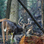 What to Plant and How to Develop a Small Lease for Hunting Deer