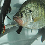 Gather Crappie Knowledge with Jonathan Phillips