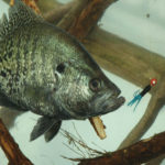Learn More about Crappie with Jonathan Phillips